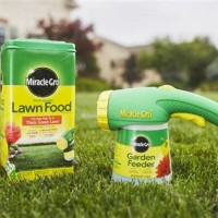 Best Type Of Fertilizer For Lawn